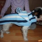 Jednoduchý svetřík pro psa