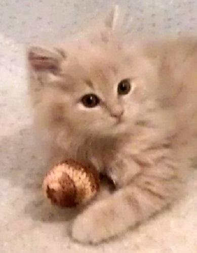 hračka pro kotě